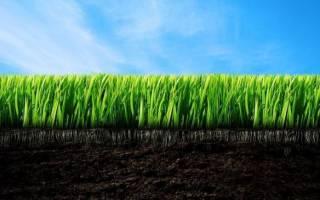 14 лучших производителей газонных трав — Рейтинг 2020