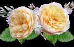 6 лучших сортов роз Остина — Рейтинг 2020