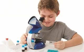 5 лучших микроскопов для школьников — Рейтинг 2020