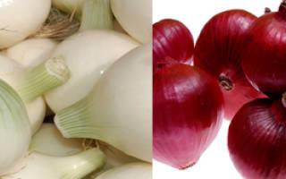 Сравниваем белый и красный лук