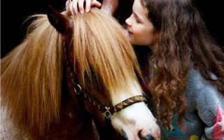 7 лучших летних лагерей в Ленинградской области — Рейтинг 2020