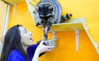 11 лучших контактных зоопарков Москвы — Рейтинг 2020