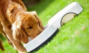 9 лучших кормов для собак класса холистик — Рейтинг 2020
