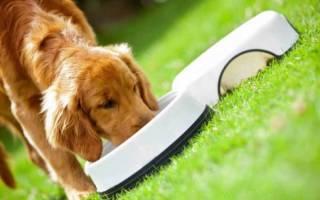 17 лучших супер-премиум кормов для собак — Рейтинг 2020