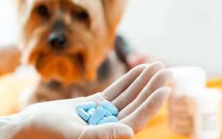 18 лучших витаминов для собак — Рейтинг 2020