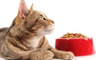 8 лучших кормов для шотландских кошек — Рейтинг 2020