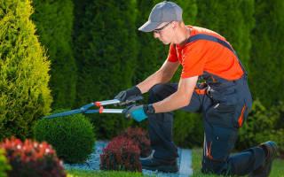 Как выбрать садовый секатор + рейтинг лучших производителей