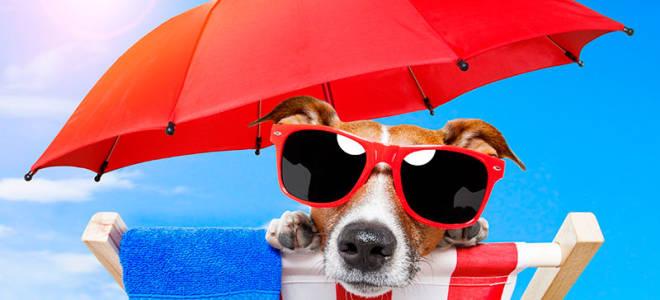 Как выбрать солнцезащитные очки.ru