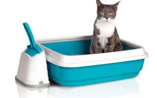 14 лучших наполнителей для кошачьего туалета — Рейтинг 2020