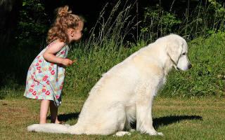 15 лучших пород собак для детей — Рейтинг 2020